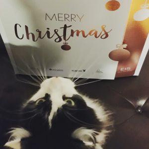 Erotischer Adventskalender für die Pussy