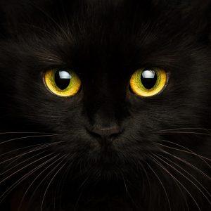 Die Neue hier – Kitty