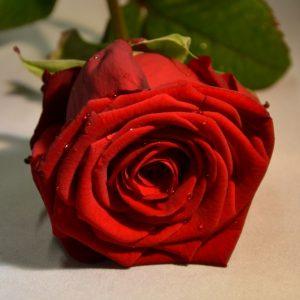 Heiße Geschenke zum Valentinstag