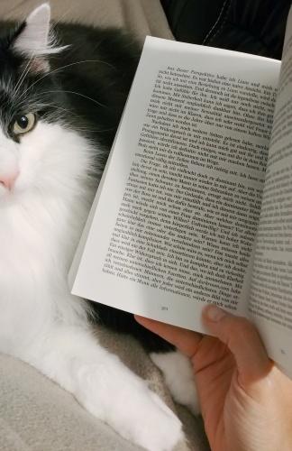 Gemütliches Lesen auf dem Sofa